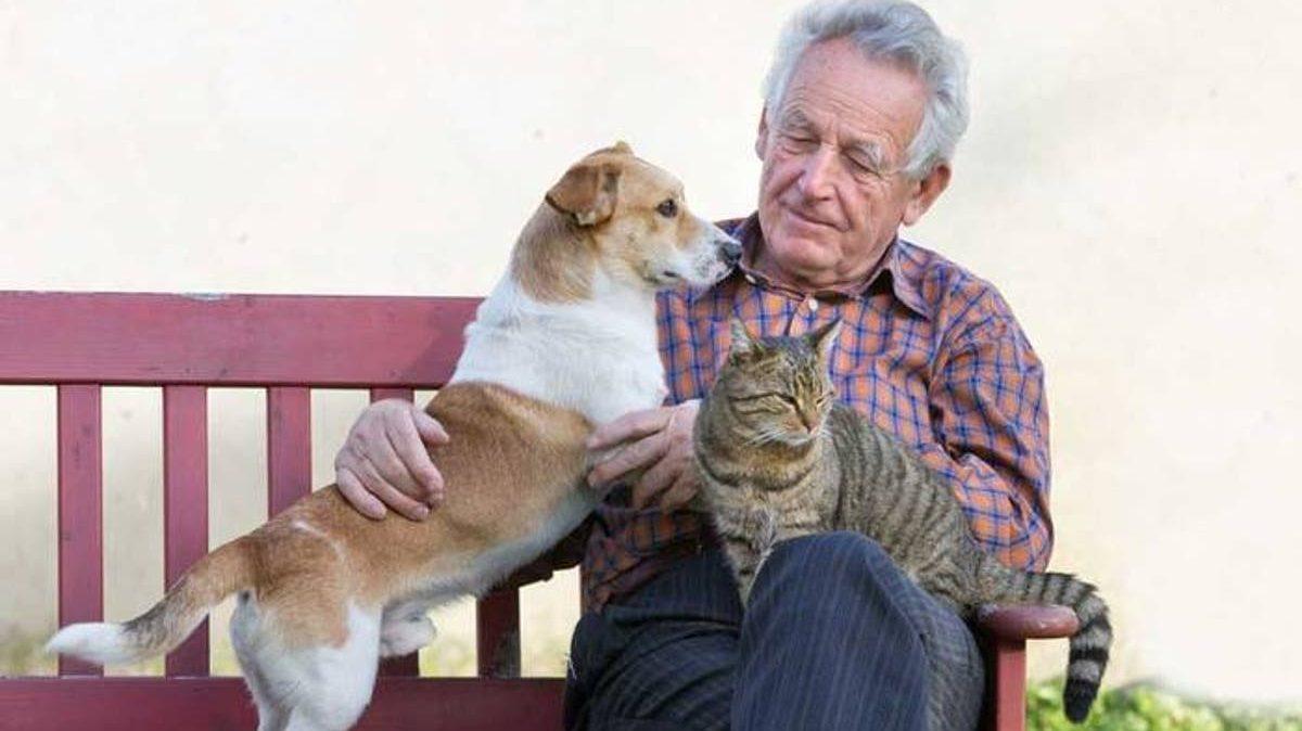 perros y gatos excelentes mascotas