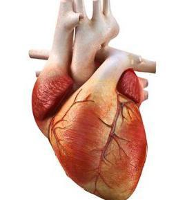 Как тренировать сердце при сердечной недостаточности -