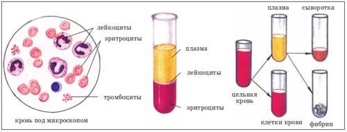 Анализ на густоту крови как называется