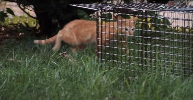 SPAY OUR STRAYS LEXINGTON KY