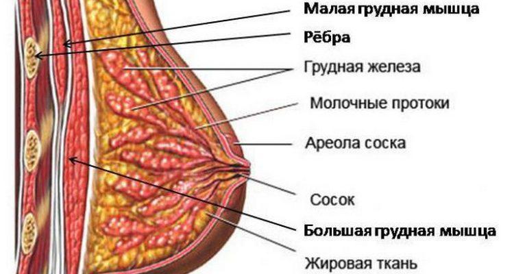 pierderea în greutate provoacă sagging sân intestine și pierderea în greutate