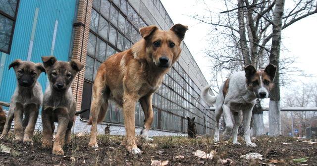 «Мы кричали, но люди разбегались, как тараканы!!!» Двух детей спасла… стая бродячих собак