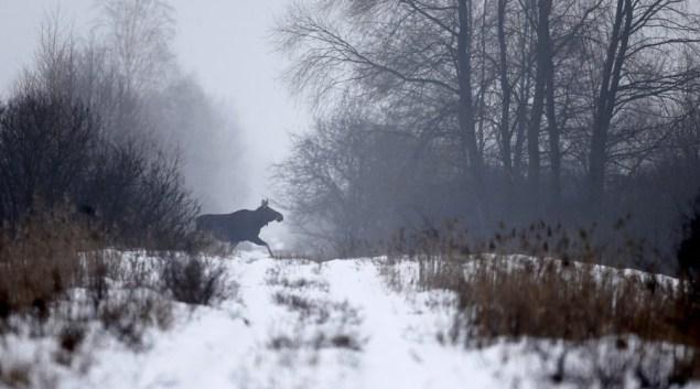 Ученые решили еще раз исследовать Чернобыль и увиденное привело их в шок