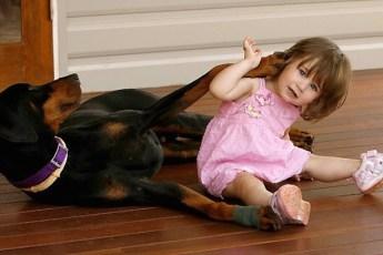 2-летняя девочка играла с доберманом. Внезапно пёс оскалился на малышку…