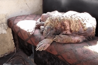Женщина отчаянно сдирала с этой собаки отмершую кожу. Спустя 6 недель ты не поверишь своим глазам!