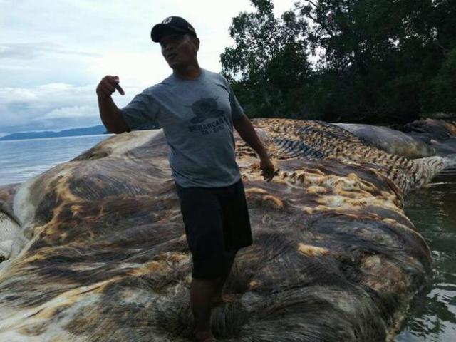 В Индонезии на берег выбросило неизвестное гигантское морское существо