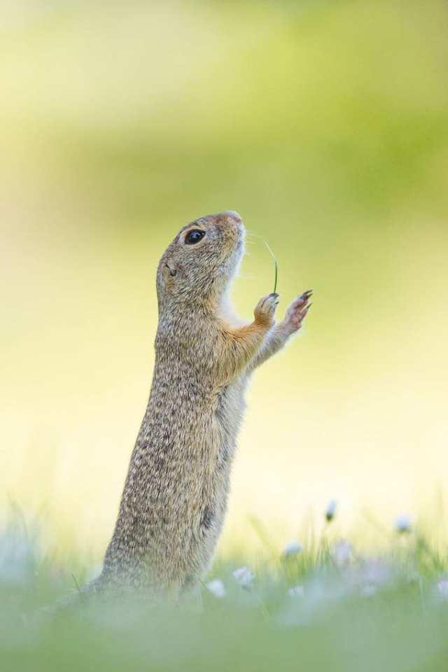 17 снимков от финалистов конкурса на самое смешное фото животных