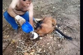 Рабочие спасли гривистого волка: животное погибало от жажды