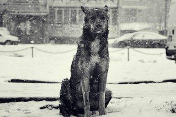 Бездомная собака спасла сбитую машиной девушку… Вот оно – новогоднее чудо!