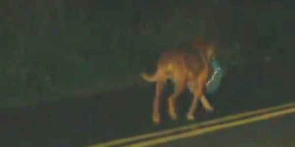 Нет, эта собака не украла мешок с мусором. Это то, от чего глаза, полные слез…