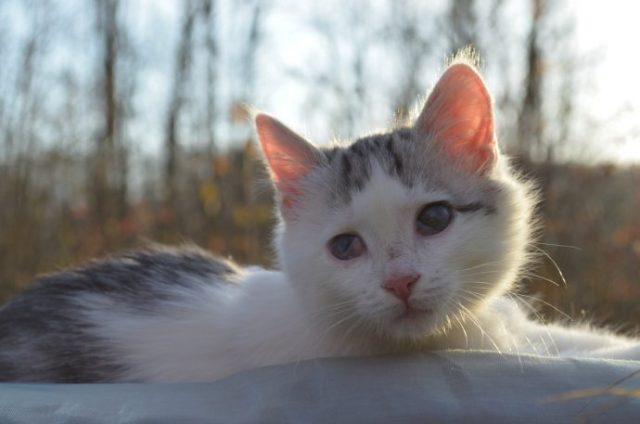 Врачи твердили, что больной котёнок долго не протянет… Но только посмотри на него сейчас!