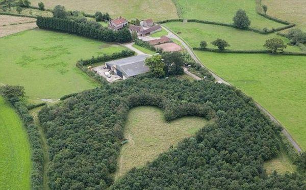 После смерти жены он высадил 6000 дубов. Спустя 20 лет стало известно, зачем он это сделал…