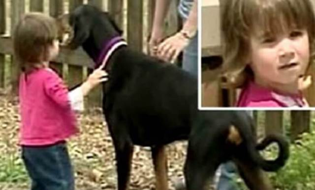 Огромный доберман отбросил 17-месячную девочку на метр. Прибежавшие родители застали жуткую картину!