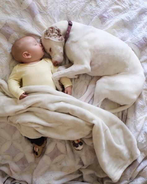 Спасённая от живодеров собака боялась всего и всех. Но не этого 11-месячного малыша!