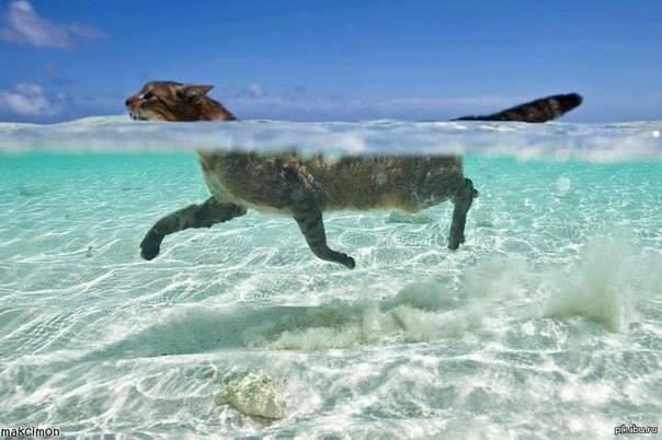 22 Фото животных, которые поднимут вам настроение