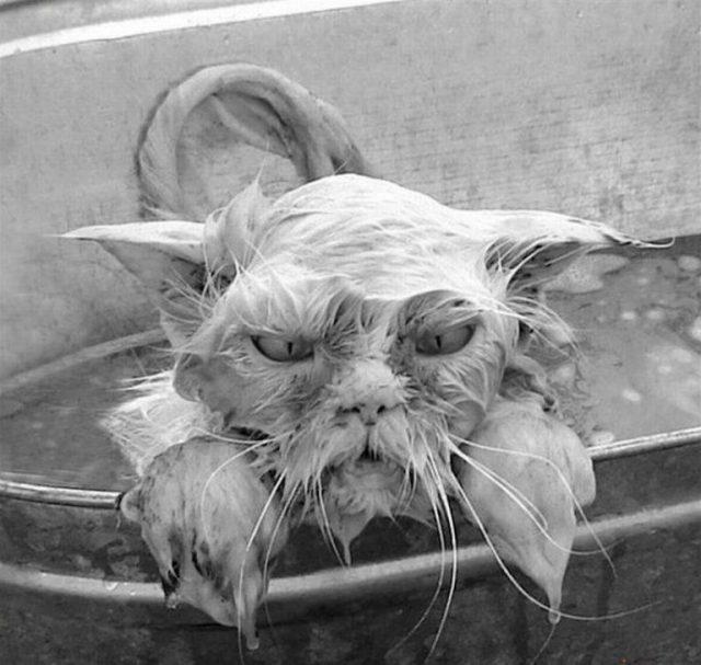 20 смешных котов, глядя на которых будете улыбаться весь день