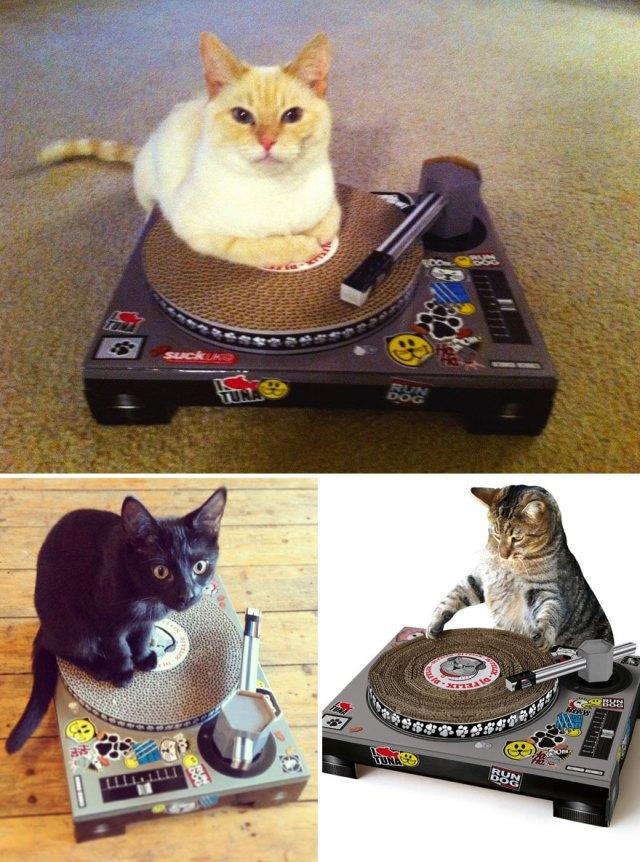 7 самых оригинальных картонных домиков для кошек