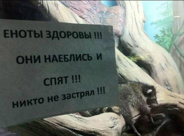 20 фото о том, что у сотрудников зоопарка тоже есть чувство юмора