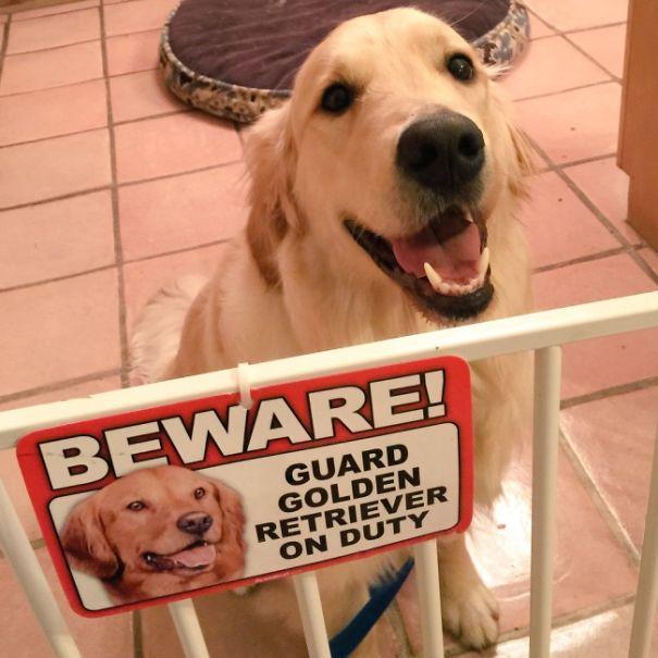 25 самых «опасных» зверей, ожидающих вас под табличкой «Осторожно, собака!»