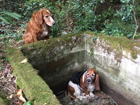 Собака охраняла оказавшегося в ловушке друга целую неделю, пока их не спасли!