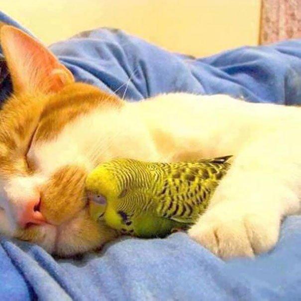 19 фотографий самой необычной дружбы животного мира