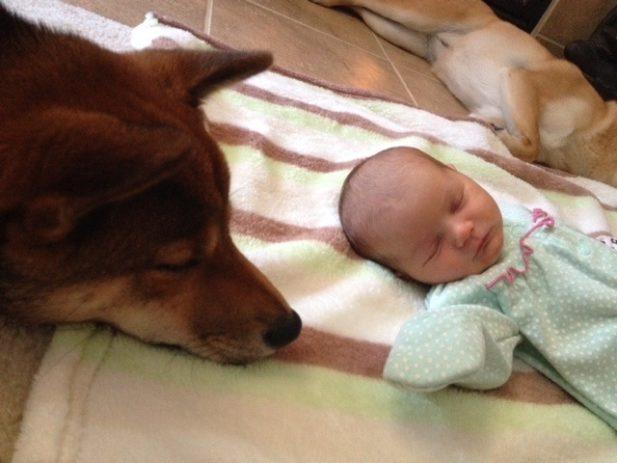 25 собачек, которые безумно влюблены в своих маленьких хозяев!