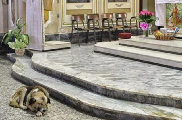 Эта собака приходит в церковь каждый день… Причина поражает!