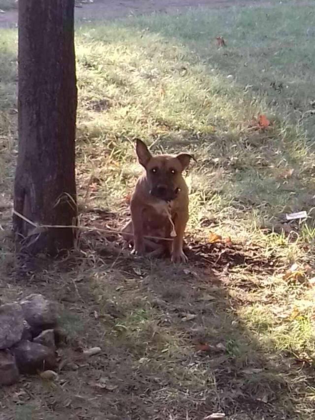 Верность и предательство! В парке нашли привязанную к дереву собаку, а рядом лежала записка…