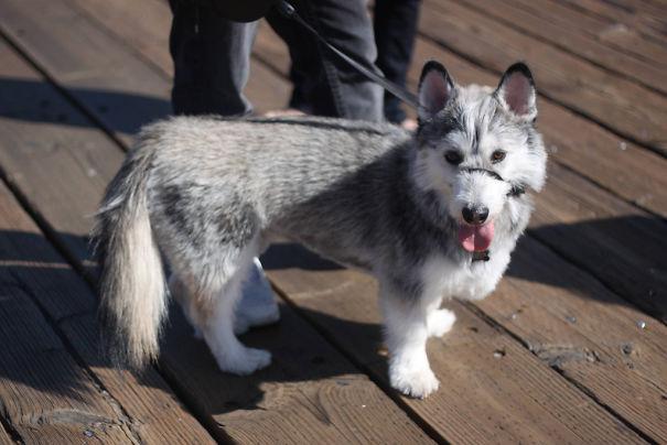 Необычные породы собак