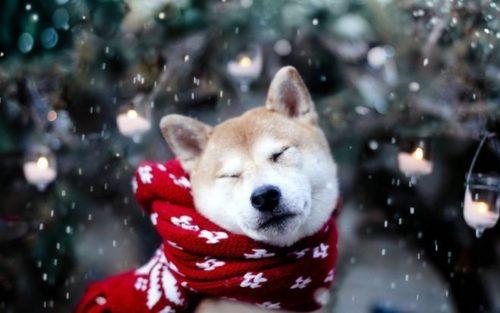 Чего ожидать от 2018 года Желтой Земляной Собаки?