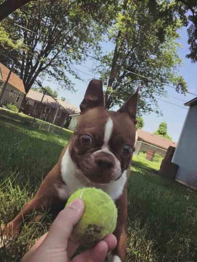 Забавные собаки, которые творят совершенно неожиданные вещи