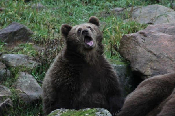 15 «неудачных» фото животных, которые поднимут настроение на целый день