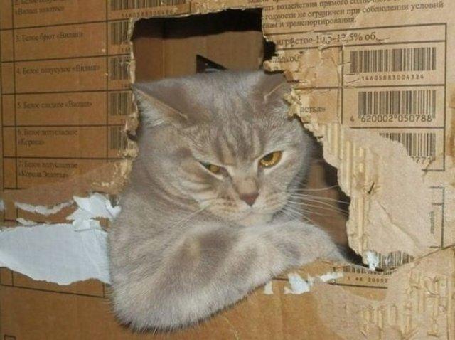 20 фото спокойных и нагло клевых котиков, которые разрушили все традиционные штампы
