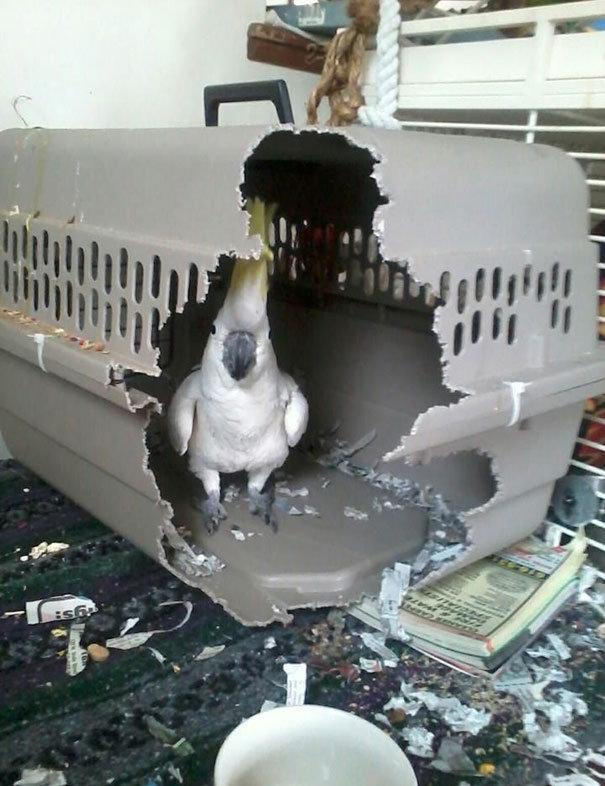 Животные-наглецы: большая подборка для хорошего настроения! (28 фото)