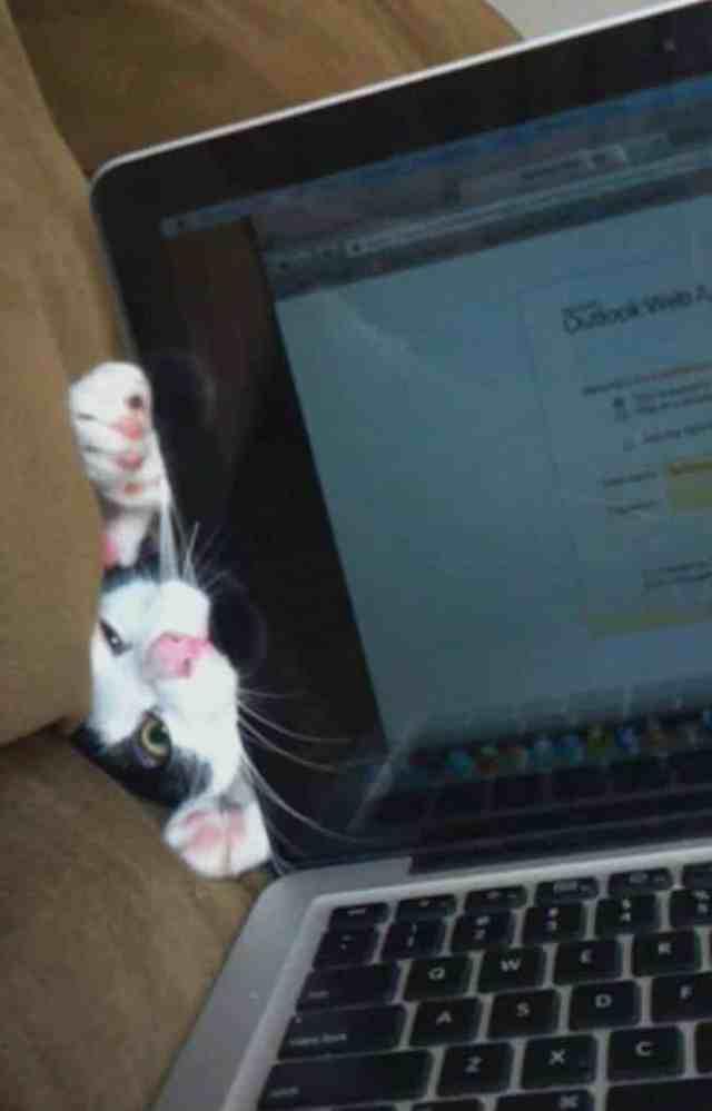 Для них, ласка превыше всего: 14 обаятельных котов, которые не дадут поработать