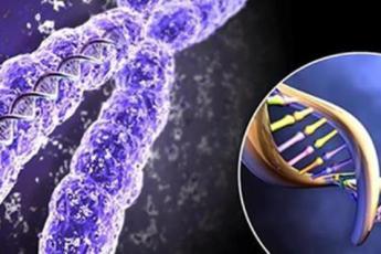 А вы решили, что пошли в папу? Сильно ошибаетесь… Потрясающие факты из мира генетики!