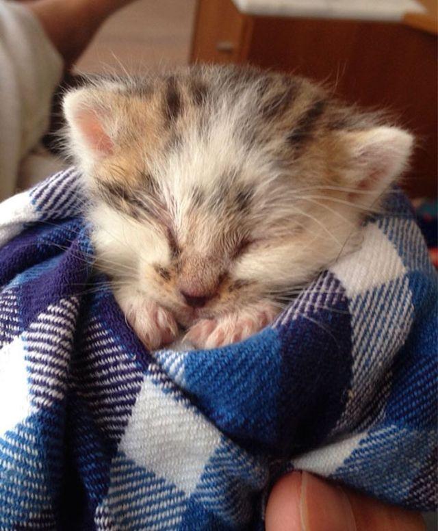 Таких милых фото кошек вы еще не видели