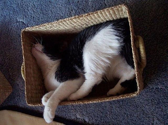 Необычные кошачьи позы для сна