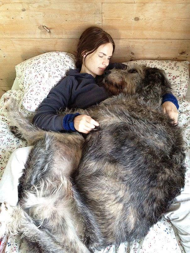 17 огромных собак, которые не понимают насколько они большие
