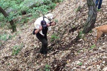 """""""Я положил его себе на плечи и понёс через лес…"""" Парень нашел в ручье слепого старого лабрадора, а вознаграждение отдал в приют!"""