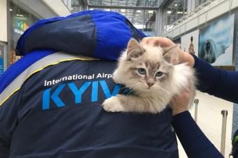 Горе-пассажирка бросила котёнка в аэропорту после того, как ее отказались пропускать на рейс