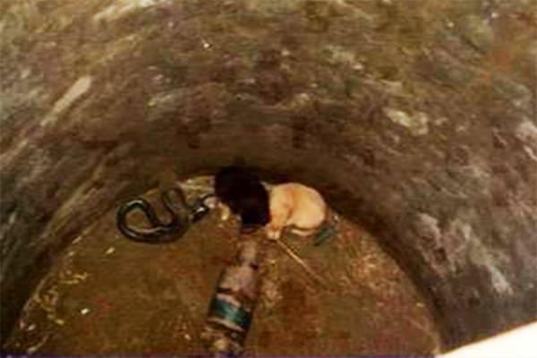 2 щенка попали в яму с коброй — спустя 48 часов спасатели были потрясены увиденным
