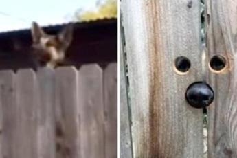Соседка сделала удивительную вещь для собаки, всегда подпрыгивающей чтобы сказать: «Привет!»