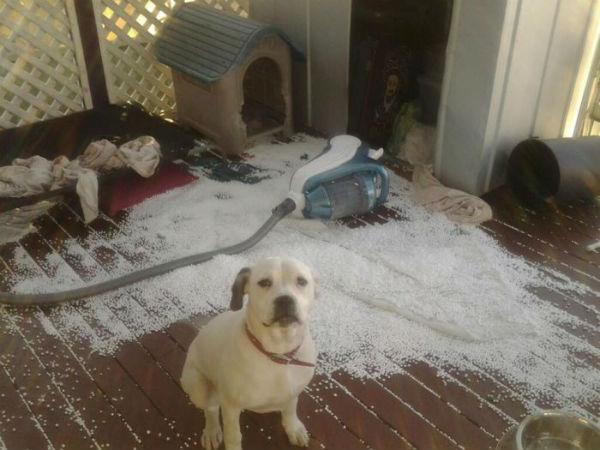 18 доказательств того, что не стоит оставлять домашних животных на хозяйстве