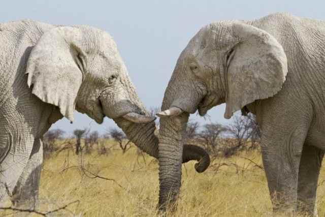 20 неожиданных фактов о животных, в которые сложно поверить