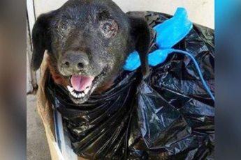 Милейшего пса подкинули в приют в пакете для мусора