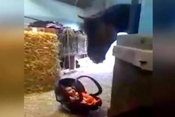 Мама оставила малыша в конюшне, а он расплакался. Не отводите взгляд от лошади!