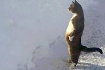 Приготовьтесь смеяться до слёз! Коты, которые ведут себя как люди. Такого вы еще не видели!