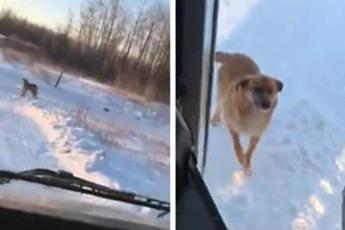 Каждый день водитель автобуса специально делает дополнительную остановку, чтобы помочь голодной собаке
