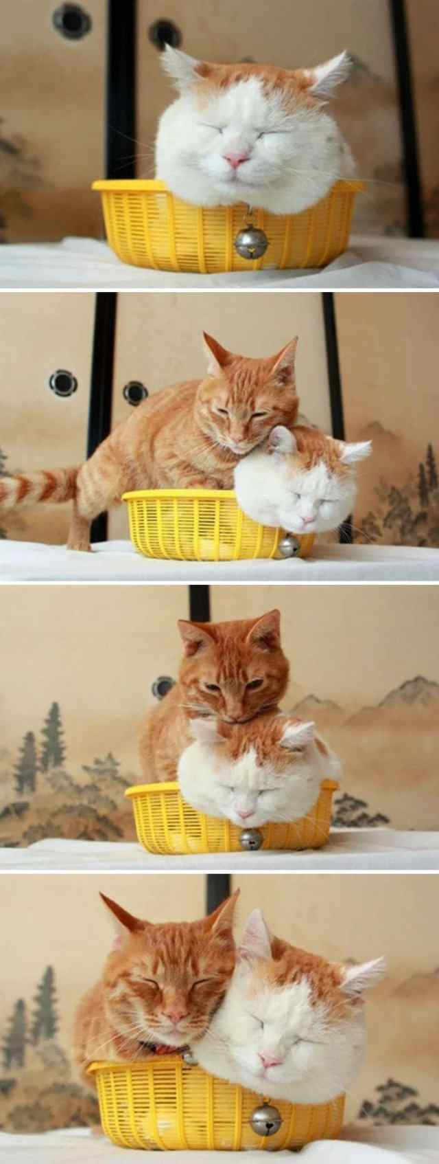 23 уморительных доказательства того, что коты где угодно найдут своё счастье